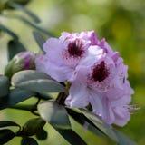 λεπτά λουλούδια Στοκ Εικόνες