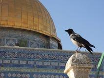 λεπτομέρεια του θόλου του βράχου (υποστήριγμα ναών) στο υπόβαθρο ενός πουλιού συνεδρίασης (στο Ισραήλ, την Ιερουσαλήμ) Στοκ Εικόνες