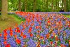 λεπτομερές ανασκόπηση floral διάνυσμα σχεδίων Κόκκινες τουλίπες Στοκ φωτογραφία με δικαίωμα ελεύθερης χρήσης