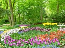 λεπτομερές ανασκόπηση floral διάνυσμα σχεδίων Κόκκινες τουλίπες Στοκ Εικόνα
