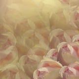 λεπτομερές ανασκόπηση floral διάνυσμα σχεδίων Λουλούδια στο άσπρος-κίτρινο υπόβαθρο Ανοικτό ροζ τριαντάφυλλα λουλουδιών floral κο Στοκ Εικόνες