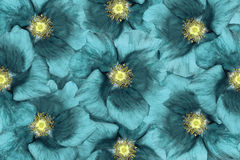 λεπτομερές ανασκόπηση floral διάνυσμα σχεδίων Τυρκουάζ λουλούδια floral κολάζ convolvulus σύνθεσης ανασκόπησης λευκό τουλιπών λου Στοκ φωτογραφία με δικαίωμα ελεύθερης χρήσης