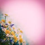 λεπτομερές ανασκόπηση floral διάνυσμα σχεδίων Στοκ Εικόνα