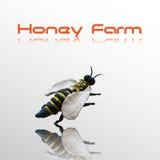 λεπτομερής η μέλισσα απομονωμένη μέλι μακροεντολή συσσώρευσε πολύ άσπρο ελεύθερη απεικόνιση δικαιώματος