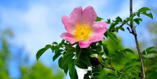 λεπτό λουλούδι Στοκ φωτογραφία με δικαίωμα ελεύθερης χρήσης