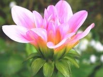 λεπτό λουλούδι στοκ φωτογραφία