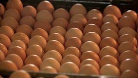 επωαστήρας αυγών κοτόπουλου φιλμ μικρού μήκους