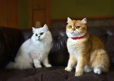 Εραστής γατών στον καναπέ Στοκ Φωτογραφίες