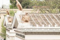 Εραλδικά ζώα στη στέγη ενός ναού στοκ εικόνες με δικαίωμα ελεύθερης χρήσης