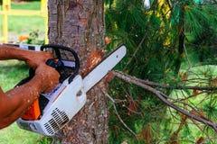 Εργαζόμενοι με το αλυσιδοπρίονο στο δάσος Στοκ εικόνες με δικαίωμα ελεύθερης χρήσης