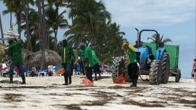 Εργαζόμενοι που καθαρίζουν την παραλία από το φύκι θάλασσας απόθεμα βίντεο