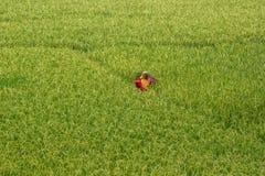 Εργαζόμενος γεωργίας στοκ φωτογραφία με δικαίωμα ελεύθερης χρήσης