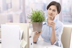 Εργαζόμενος γραφείων θηλυκών που κρατά το σε δοχείο φυτό Στοκ εικόνα με δικαίωμα ελεύθερης χρήσης
