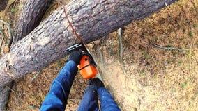 Εργαζόμενος εμπόρων ξυλείας υλοτόμων στο προστατευτικό δέντρο ξυλείας καυσόξυλου εργαλείων τέμνον στο δάσος με το αλυσιδοπρίονο απόθεμα βίντεο