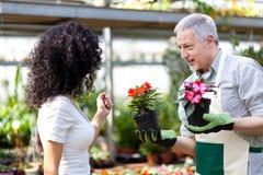 Εργαζόμενος θερμοκηπίων που δίνει ένα δοχείο λουλουδιών Στοκ εικόνα με δικαίωμα ελεύθερης χρήσης