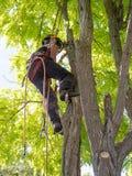 Εργαζόμενος θηλυκός χειρούργος δέντρων Στοκ Φωτογραφία