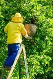 Εργαζόμενος μελισσοκόμος Στοκ φωτογραφίες με δικαίωμα ελεύθερης χρήσης