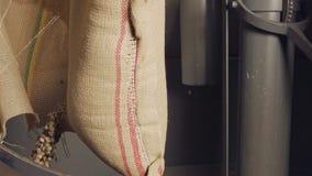 Εργαζόμενος που κόβει μια burlap τσάντα με τα πράσινα φασόλια καφέ - σε αργή κίνηση απόθεμα βίντεο