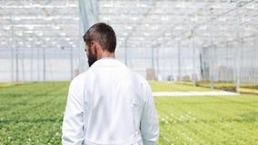 Εργαζόμενος που περπατά σε ένα θερμοκήπιο Γεωργικός μηχανικός που εργάζεται στο θερμοκήπιο απόθεμα βίντεο