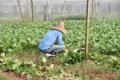 Εργαζόμενος σε ένα φυτικό αγρόκτημα στοκ φωτογραφία με δικαίωμα ελεύθερης χρήσης