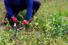 Εργαζόμενος στον κήπο Στοκ εικόνες με δικαίωμα ελεύθερης χρήσης
