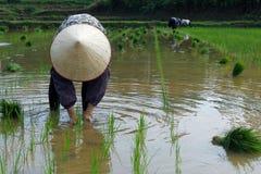 Εργαζόμενος στον τομέα ρυζιού Στοκ φωτογραφία με δικαίωμα ελεύθερης χρήσης