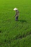 Εργαζόμενος στον τομέα ρυζιού Στοκ εικόνα με δικαίωμα ελεύθερης χρήσης