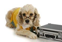Εργαζόμενο σκυλί Στοκ Εικόνα