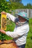 Εργαζόμενο apiarist σε μια εποχή άνοιξης Στοκ φωτογραφία με δικαίωμα ελεύθερης χρήσης