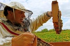 Εργαζόμενο apiarist. Στοκ Εικόνες