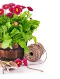 εργαλεία άνοιξη κήπων λουλουδιών Στοκ φωτογραφίες με δικαίωμα ελεύθερης χρήσης