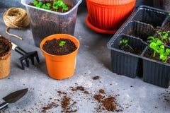 Εργαλεία κήπων, δοχεία, σπορόφυτα σε ένα γκρίζο συγκεκριμένο υπόβαθρο Αντιγράψτε το διάστημα στοκ φωτογραφία με δικαίωμα ελεύθερης χρήσης