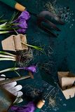 Εργαλεία κηπουρικής, δοχεία τύρφης, λουλούδι κρόκων Άνοιξη Στοκ φωτογραφίες με δικαίωμα ελεύθερης χρήσης