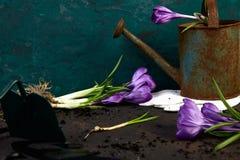 Εργαλεία κηπουρικής, δοχεία τύρφης, λουλούδι κρόκων Άνοιξη Στοκ Εικόνες