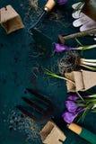 Εργαλεία κηπουρικής, δοχεία τύρφης, λουλούδι κρόκων Άνοιξη Στοκ Εικόνα