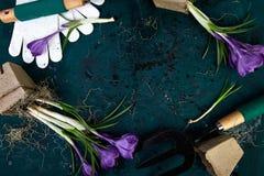 Εργαλεία κηπουρικής, δοχεία τύρφης, λουλούδι κρόκων Άνοιξη Στοκ Φωτογραφία