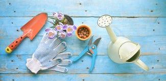Εργαλεία κηπουρικής και νέο λουλούδι κρόκων, άνοιξη Στοκ φωτογραφία με δικαίωμα ελεύθερης χρήσης