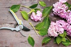 Εργαλεία κηπουρικής στο βρώμικο ξύλινο υπόβαθρο grunge Στοκ εικόνες με δικαίωμα ελεύθερης χρήσης