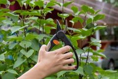 Εργαλείο κήπων pruner υπό εξέταση στο υπόβαθρο κλάδων στοκ φωτογραφία με δικαίωμα ελεύθερης χρήσης