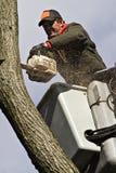 εργασία δέντρων Στοκ φωτογραφία με δικαίωμα ελεύθερης χρήσης