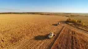 Εργασία θεριστικών μηχανών για cornfield απόθεμα βίντεο