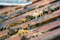 εργασία μελισσών Στοκ εικόνα με δικαίωμα ελεύθερης χρήσης