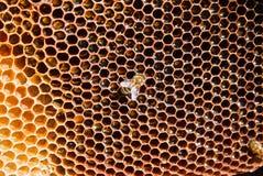 εργασία μελισσών Στοκ Εικόνες
