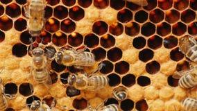 Εργασία μελισσών μελιού στην κυψέλη Στοκ Φωτογραφίες