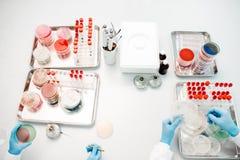 Εργασία με τα βακτηρίδια Στοκ φωτογραφία με δικαίωμα ελεύθερης χρήσης