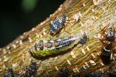 Εργασία μυρμηγκιών Στοκ Εικόνα