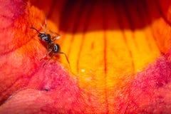 Εργασία μυρμηγκιών Στοκ φωτογραφία με δικαίωμα ελεύθερης χρήσης