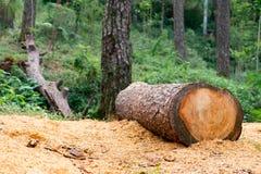 Εργασία ξυλείας Στοκ Φωτογραφίες