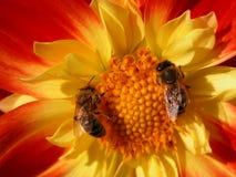 εργασία ομάδων μελισσών στοκ εικόνες