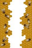 εργασία πλαισίων μελισσών ελεύθερη απεικόνιση δικαιώματος
